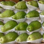 جوافـــه / Guava