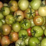 طماطم / Tomatoes