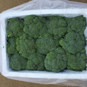 بروكلـــي / Broccoli