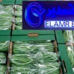 فاصوليا خضراء / Green bean