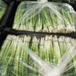 بصل اخضر / green onions
