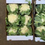قرنبيط / Cauliflower
