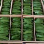 البازلاء الخضراء / Green Peas